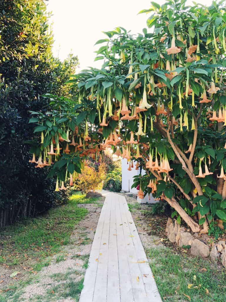 Ischia is a paraside. Garden and Villas resort Ischia, view from the balcony
